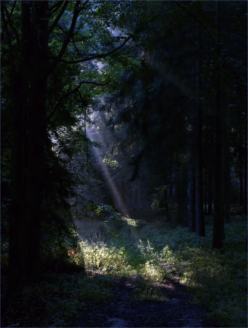 Lichtblick am Morgen
