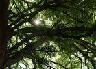 Lichtblick - die Sonne findet ihren Weg