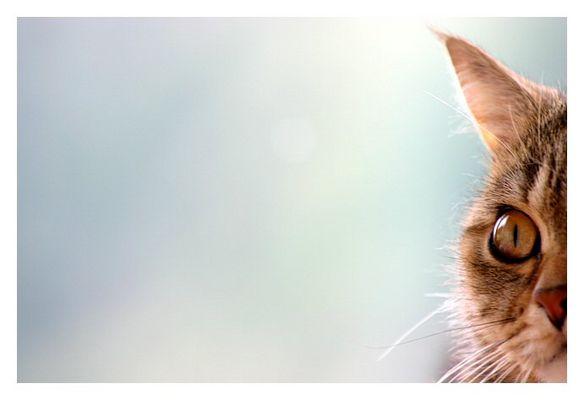 Lichtblick einer Katze
