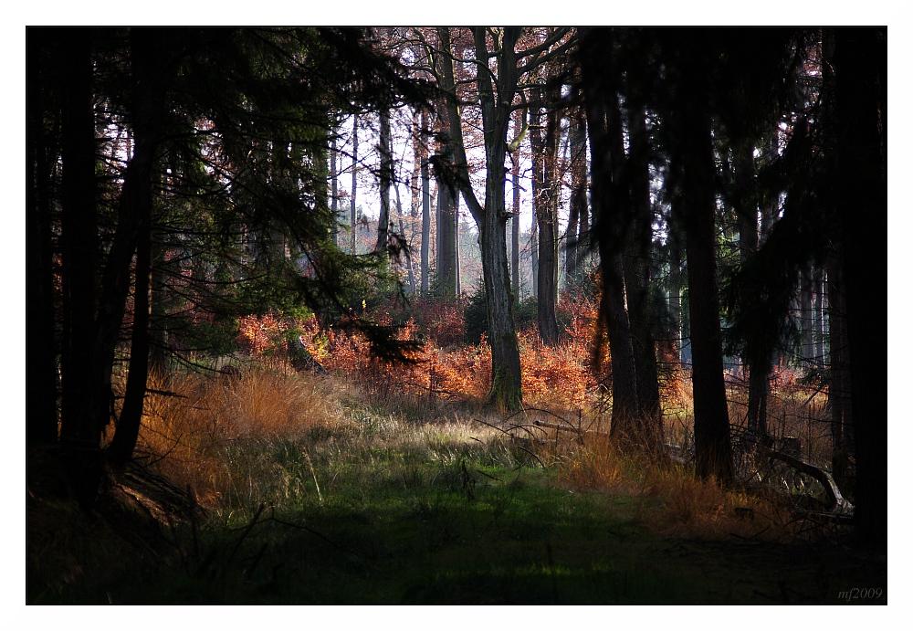 Lichtblick / Glimmer of light