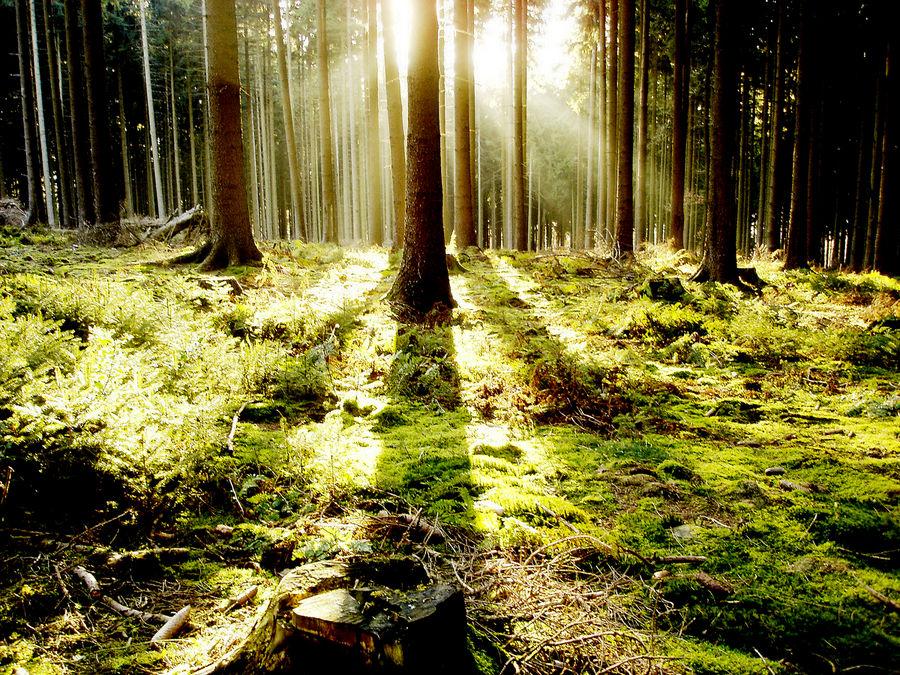 Lichtblick im Düsterwald