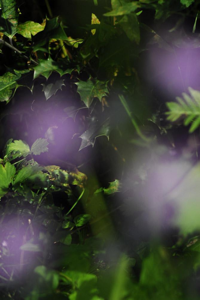 Lichtblitze in Violett