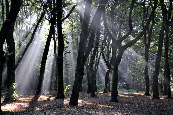 --- Lichtdurchflutet ...............
