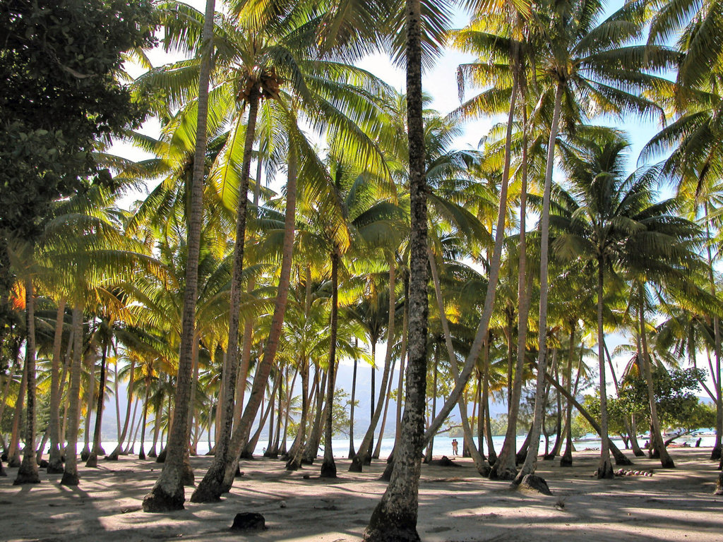 Lichtdurchfluteter Palmenwald auf einer kleinen Südseeinsel
