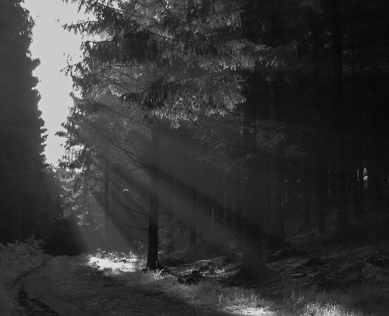 Lichtdusche im morgentlichen Waldnebel