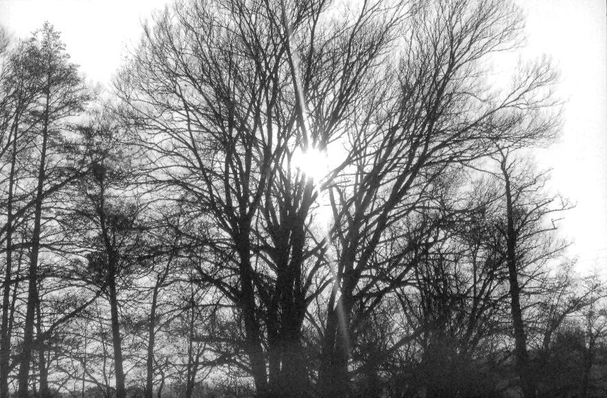 Lichter Baum