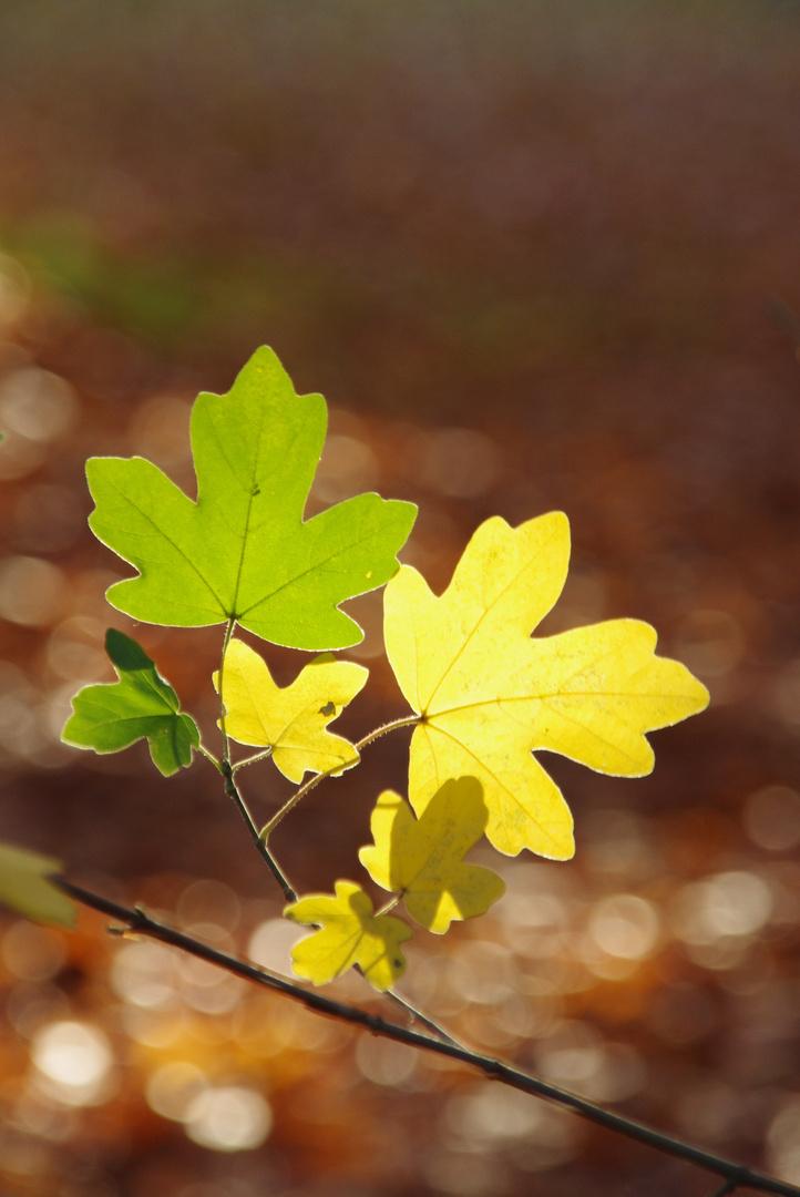 Lichter Herbst