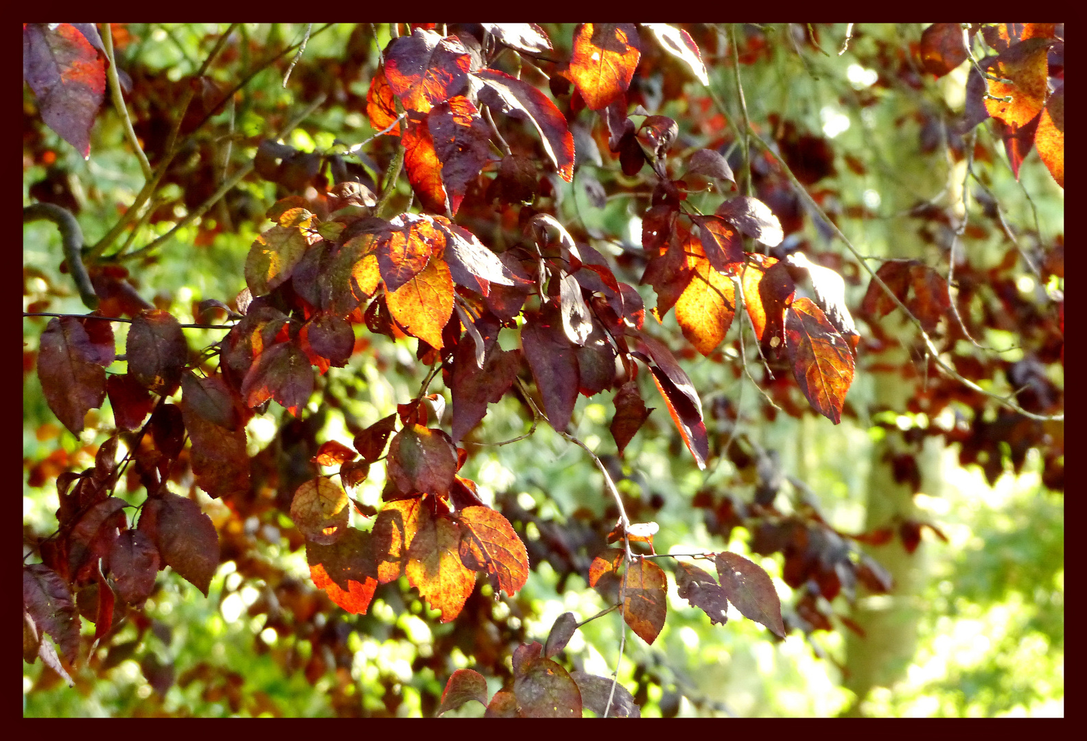 Lichter im Herbst