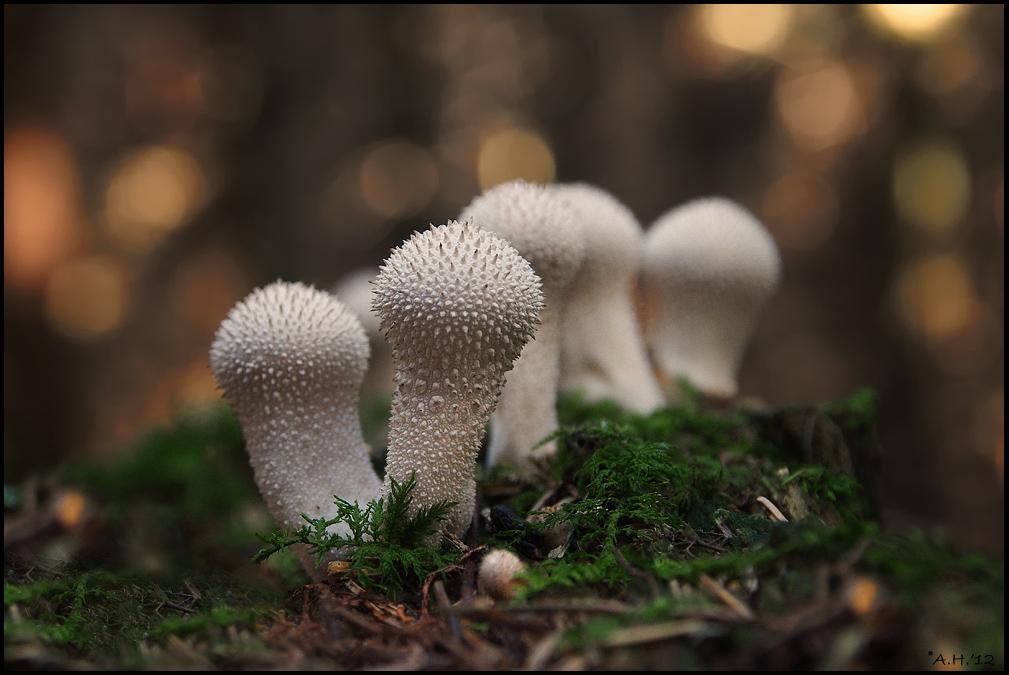 Lichter, Pilze und etwas Moos