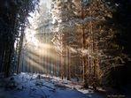 Lichtermeer durchflutet den Wald