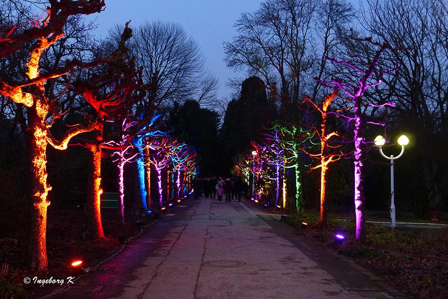 Lichterwochen - beleuchteter Weg zur blauen Stunde