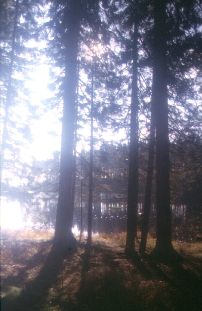 Lichtes Waldviertel