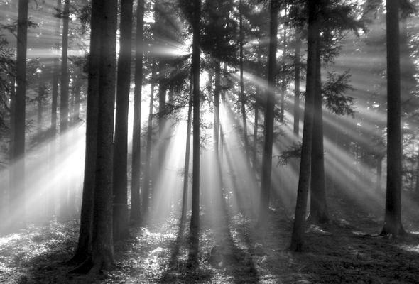 Lichtfantasie im herbstlichen Nebelwald