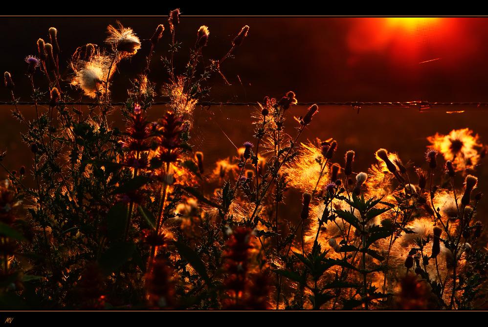 Lichtflüstern