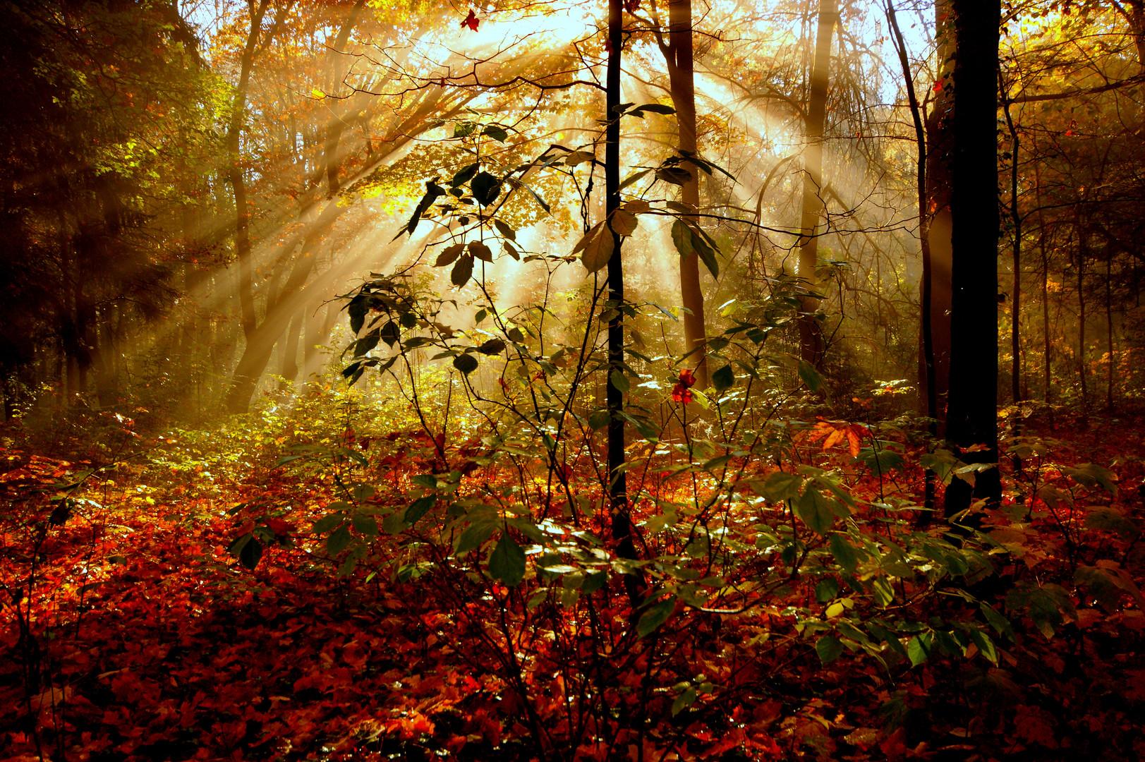 Lichtimpressionen des Herbstes