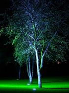 Lichtkunst am Baum