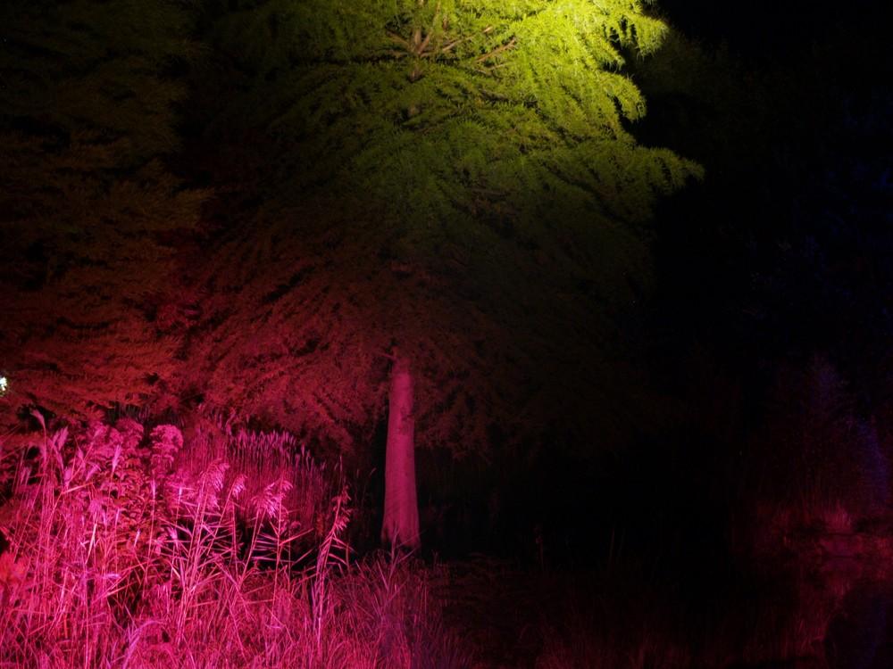 Lichtkunst Maximilianpark Hamm