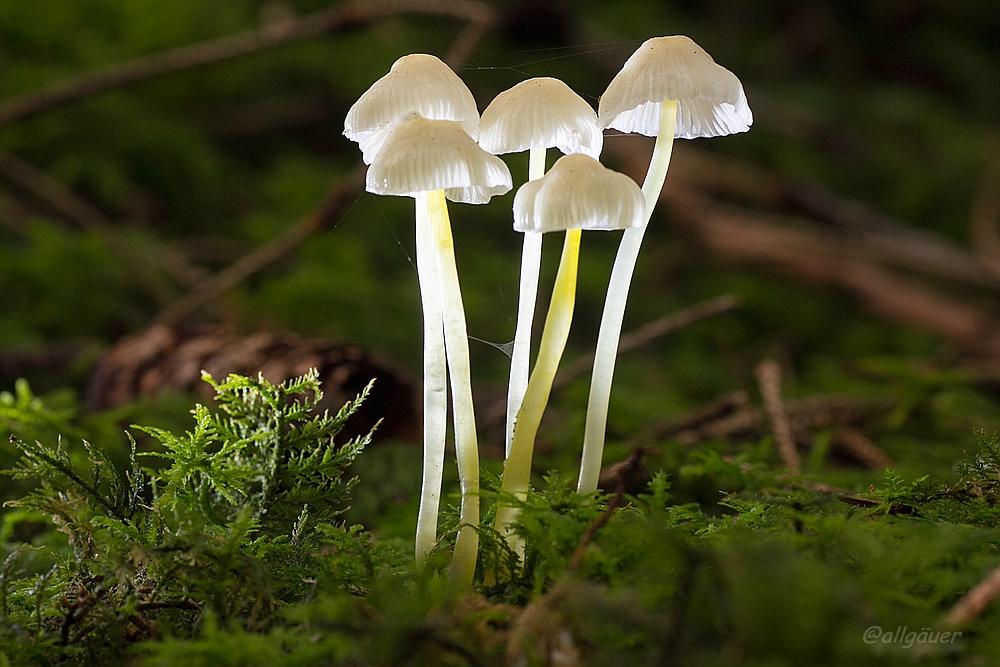 Lichtlein im Wald