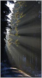 Lichtpfade 4