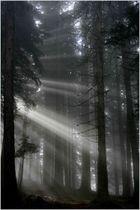 Lichtpfeile