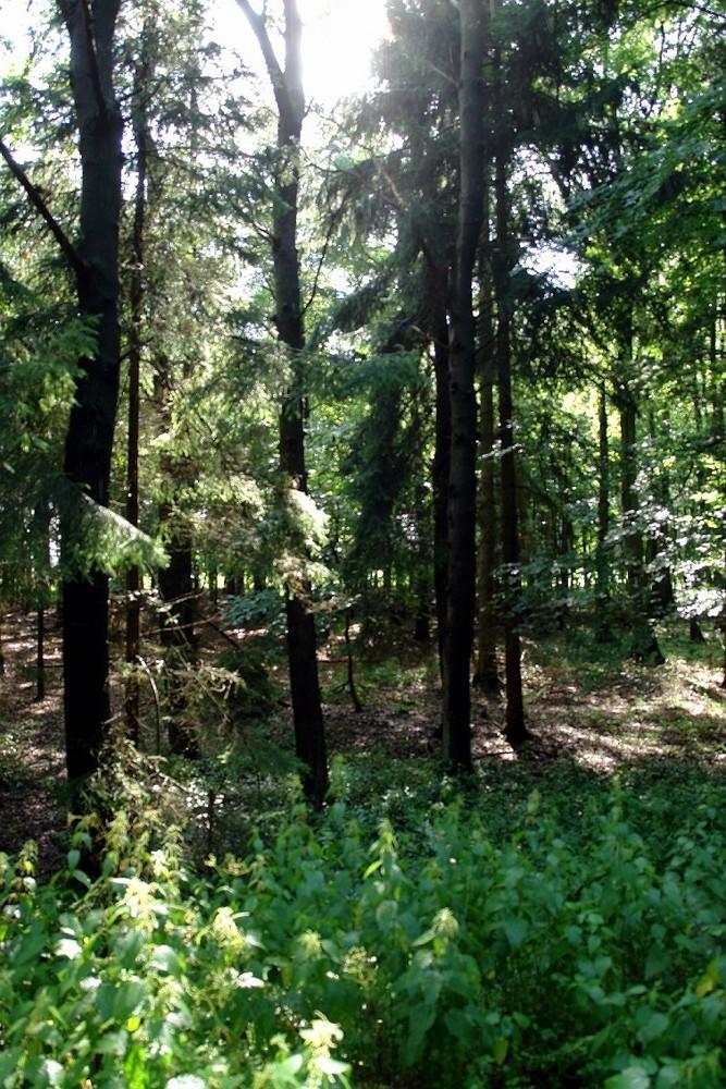 Lichtspiel im Walde