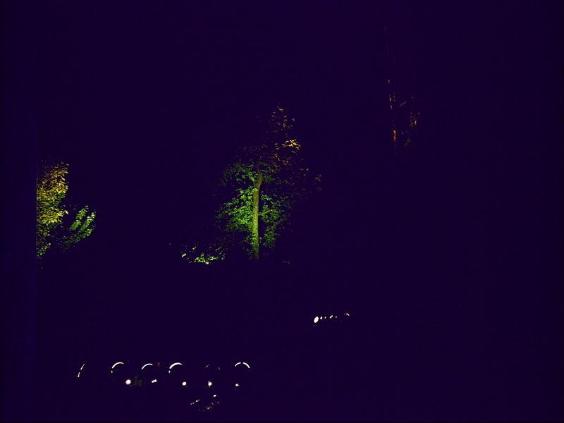 Lichtspiel mit Bäumen