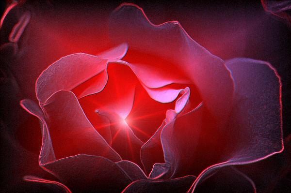 Lichtspiel Rose