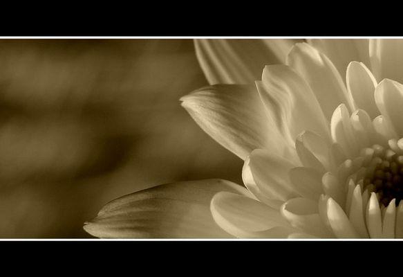 Lichtspiele einer Blüte !
