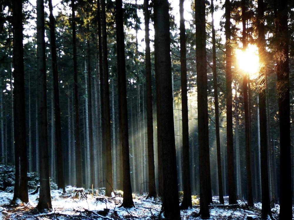lichtspiele im eiswald