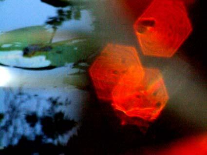 Lichtspiele im Teich