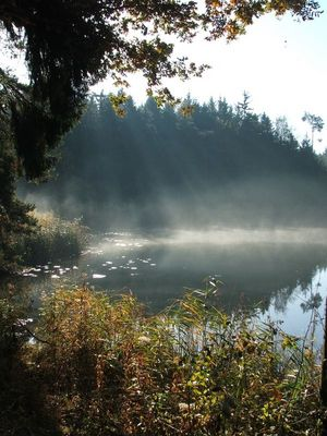 Lichtstrahlen am See