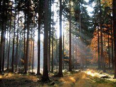 Licht...um unvergessene Momente festzuhalten