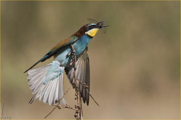 Lichtvogel
