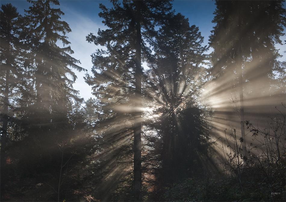 lichtwunder