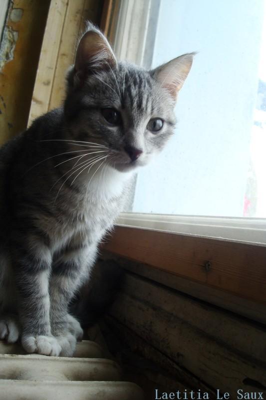 """"""" L'idéal du calme est dans un chat assis. """" Jules Renard"""