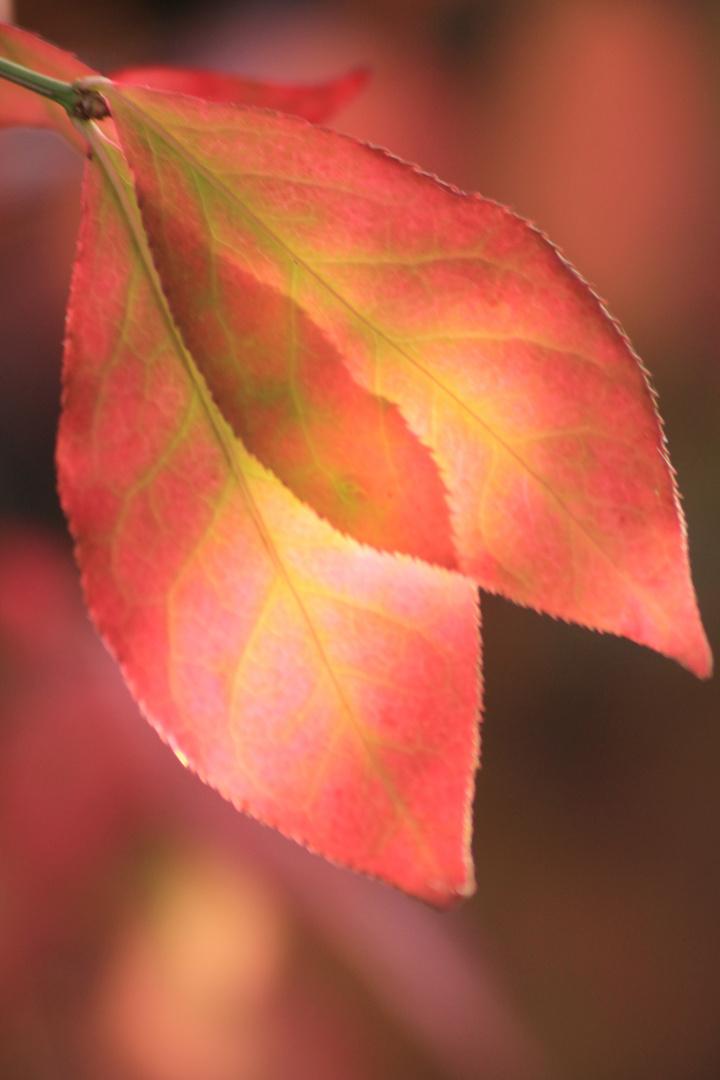 Lieb gewonnene Blätter