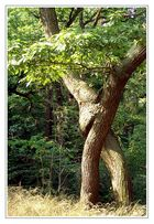 Liebe bringt selbst die Bäume zum Tanzen