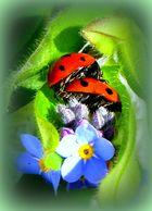 Liebe im Frühling ...