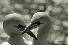 Liebe ist . . .