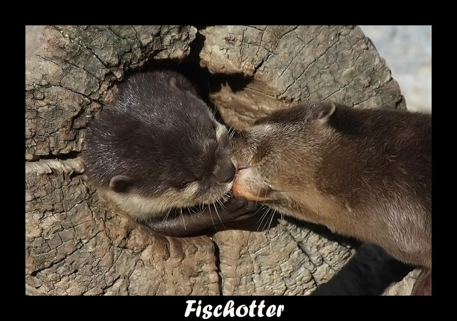 Liebe ist ! Wenn man sich küsst