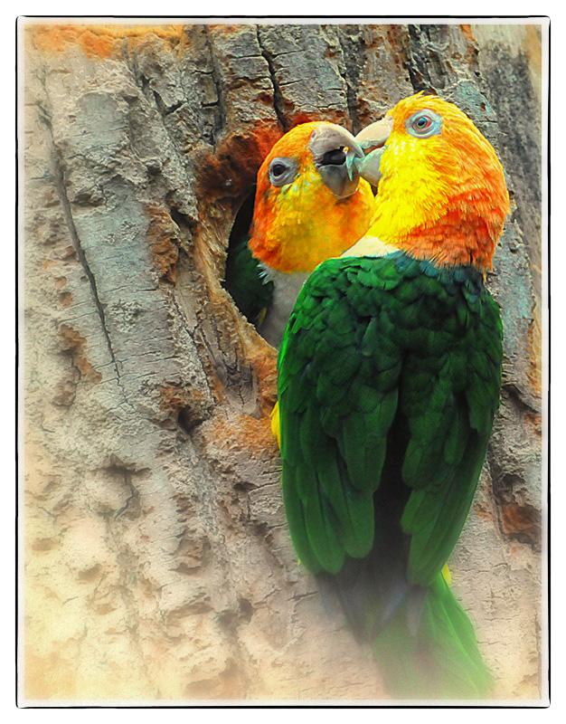 Liebe ist...II