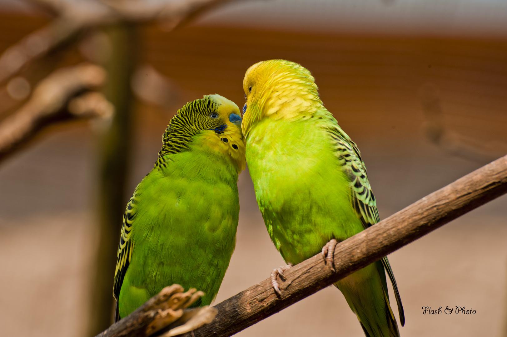 Liebe ist.....................sich ganz tief in die Augen zu schauen.