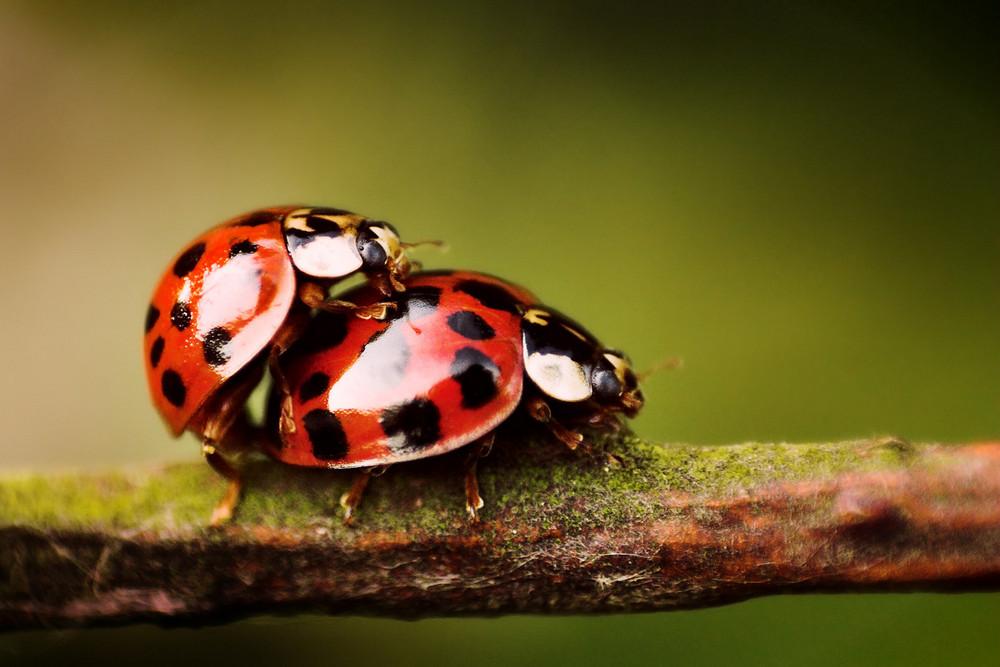 Liebe machen Foto & Bild | tiere, wildlife, insekten
