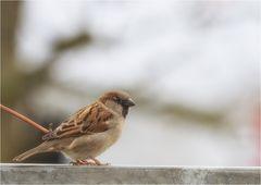 Lieber den Spatz in der der Hand, als die Taube auf dem Dach.