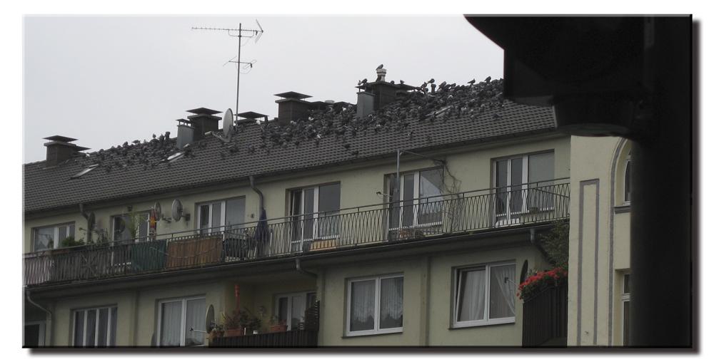 Lieber die Taube auf dem Dach.....