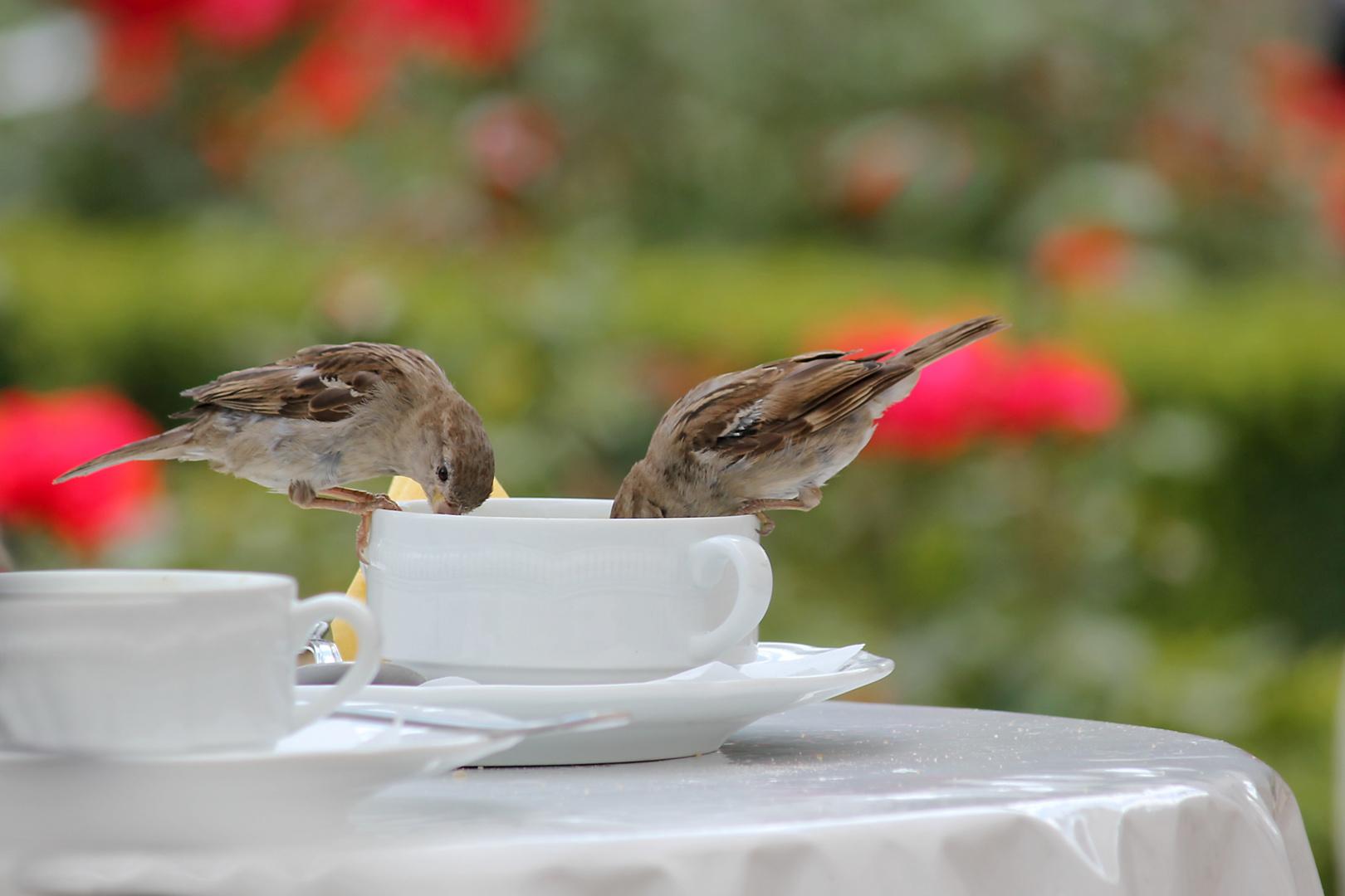 Lieber die Taube auf dem Dach als die Spatzen in der Tasse (Oder wie war das?)