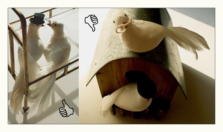 Lieber eine Taube im Bett - als eine Stumme auf dem Dach! :)