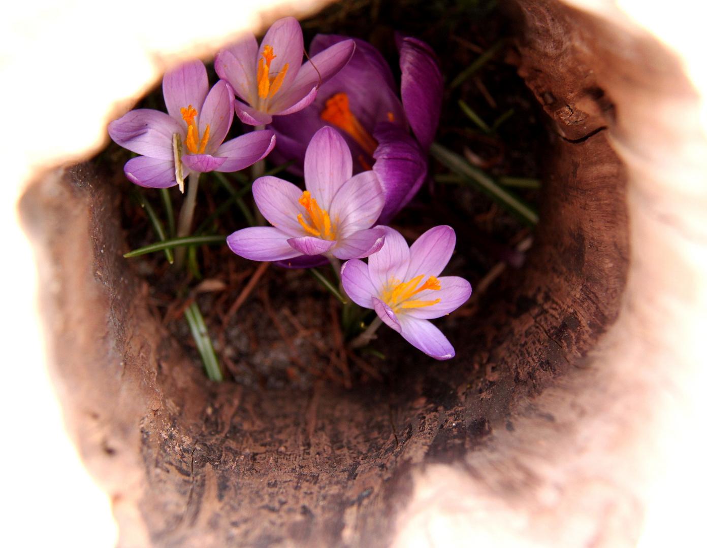 Lieber Frühling, komm doch bald!