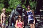 lieber Gorilla