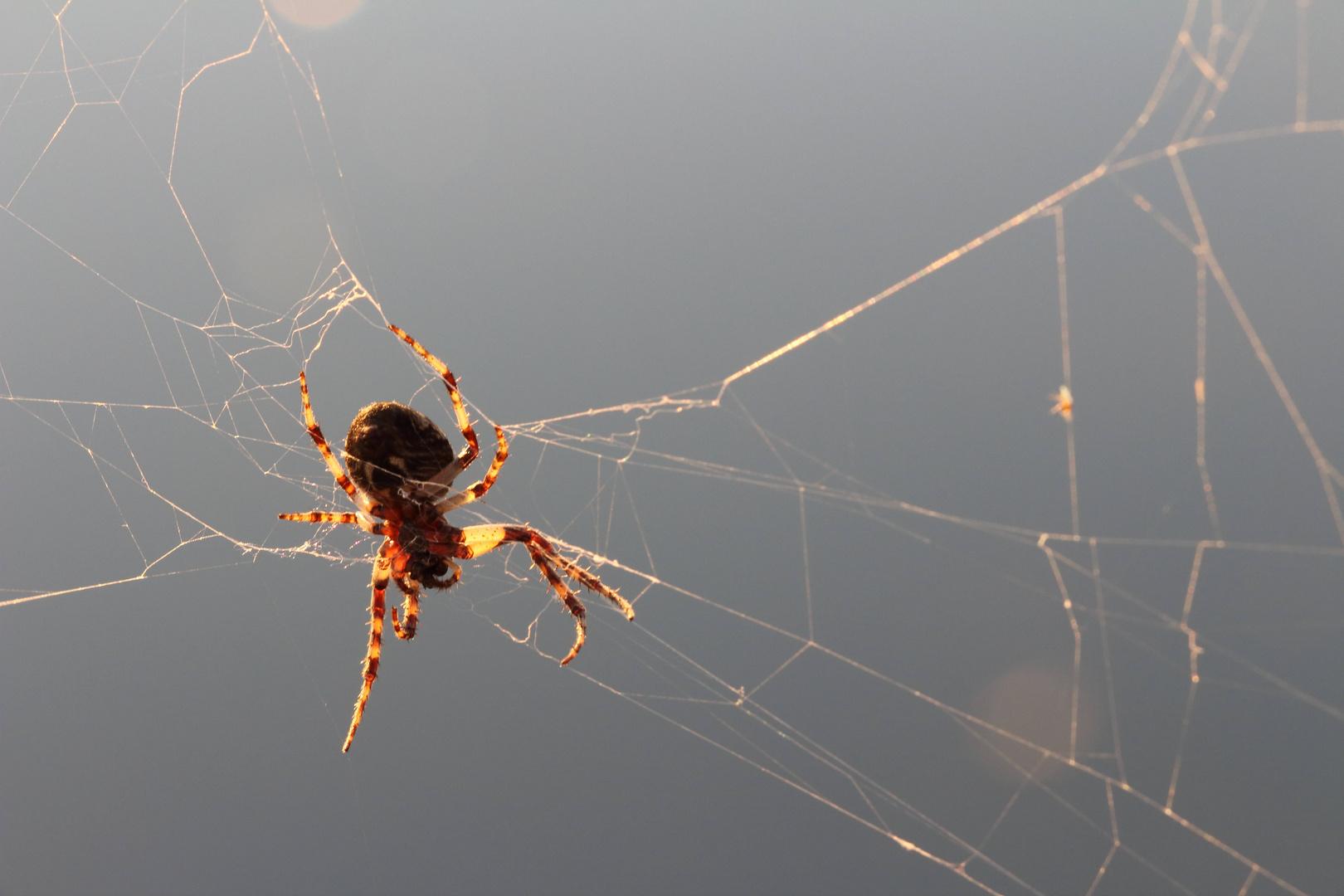 ..lieber sonnen als spinnen ;-)
